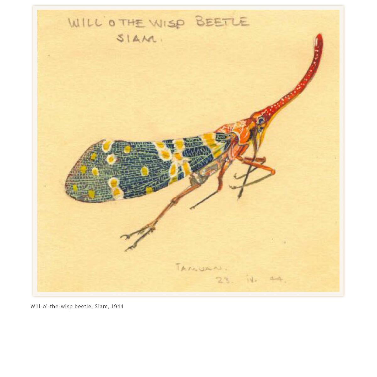 Will-o-wisp